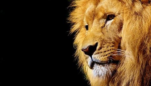 アフリカのイメージ ライオンの画像